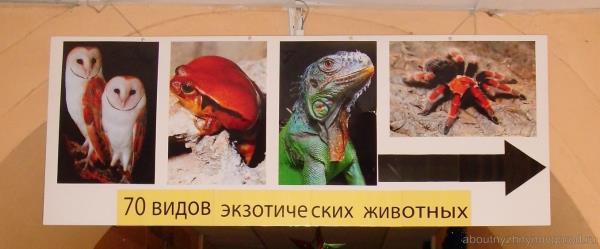 Экзотариум в Нижнем Новгороде